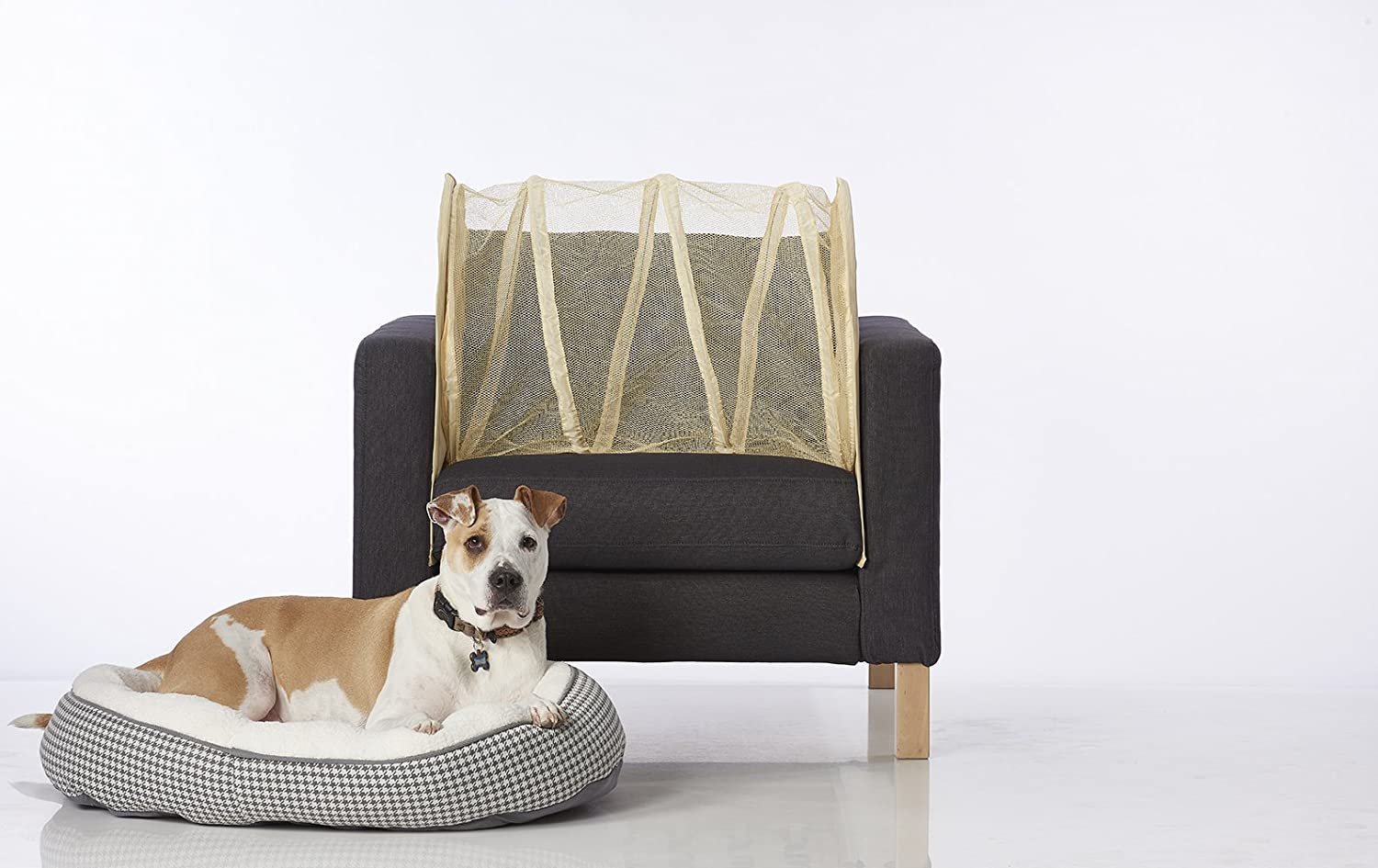How To Keep Pets Off Furniture Home Design Ideas And Pictures