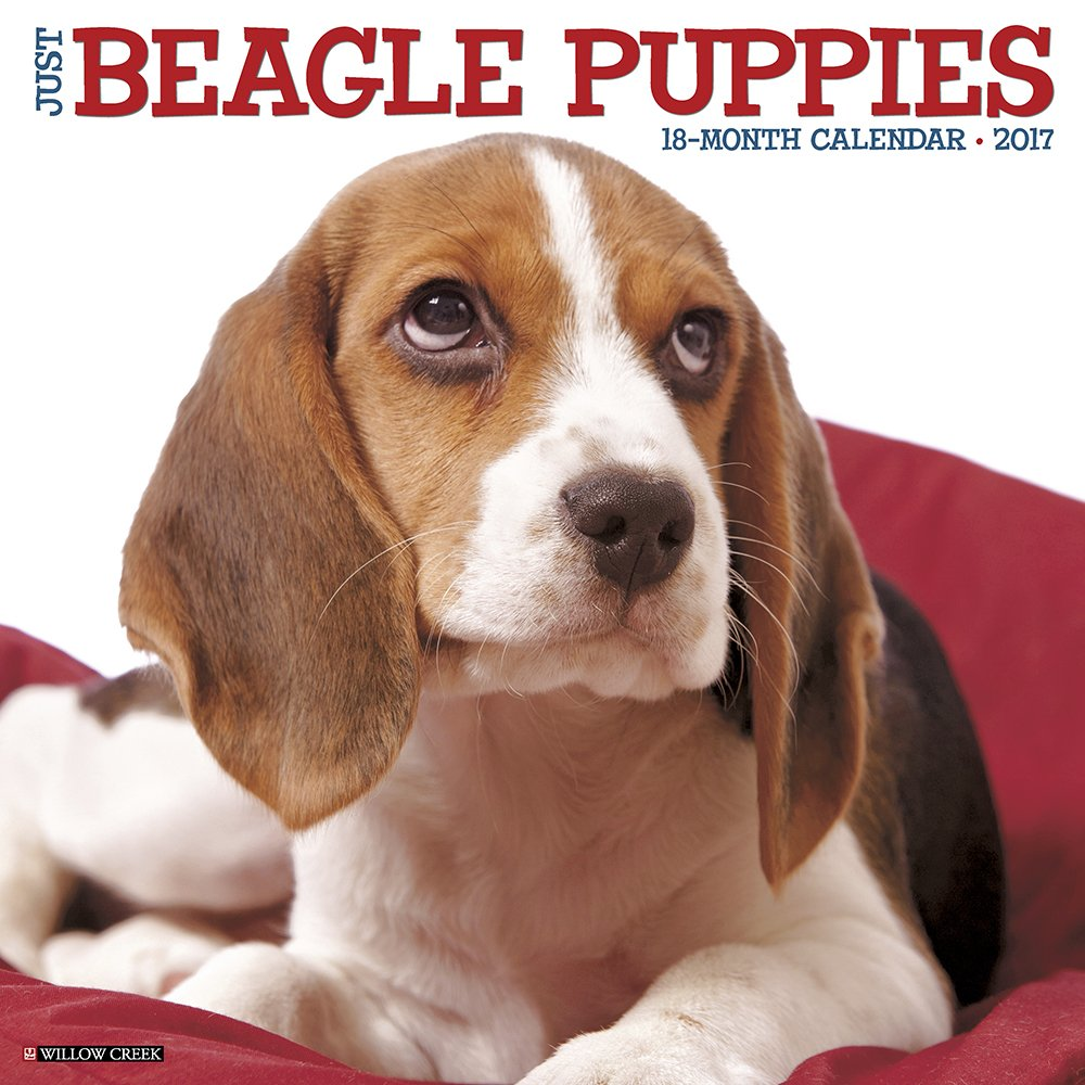 Good Wisconsin Beagle Adorable Dog - 71yyy5teUvL  Image_911612  .jpg