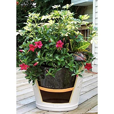 "Ups A Daisy Round Planter Insert Size: 12"" : Garden & Outdoor"
