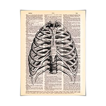 Amazon.com: Sternum Anatomy - Printed on Vintage Dictionary Paper ...
