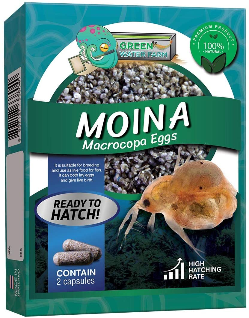Greenwaterfarm Moina Macrocopa Eggs (Water Flea) Live Fish Food for Hatching and Culture Suitable for Feed Betta Fish