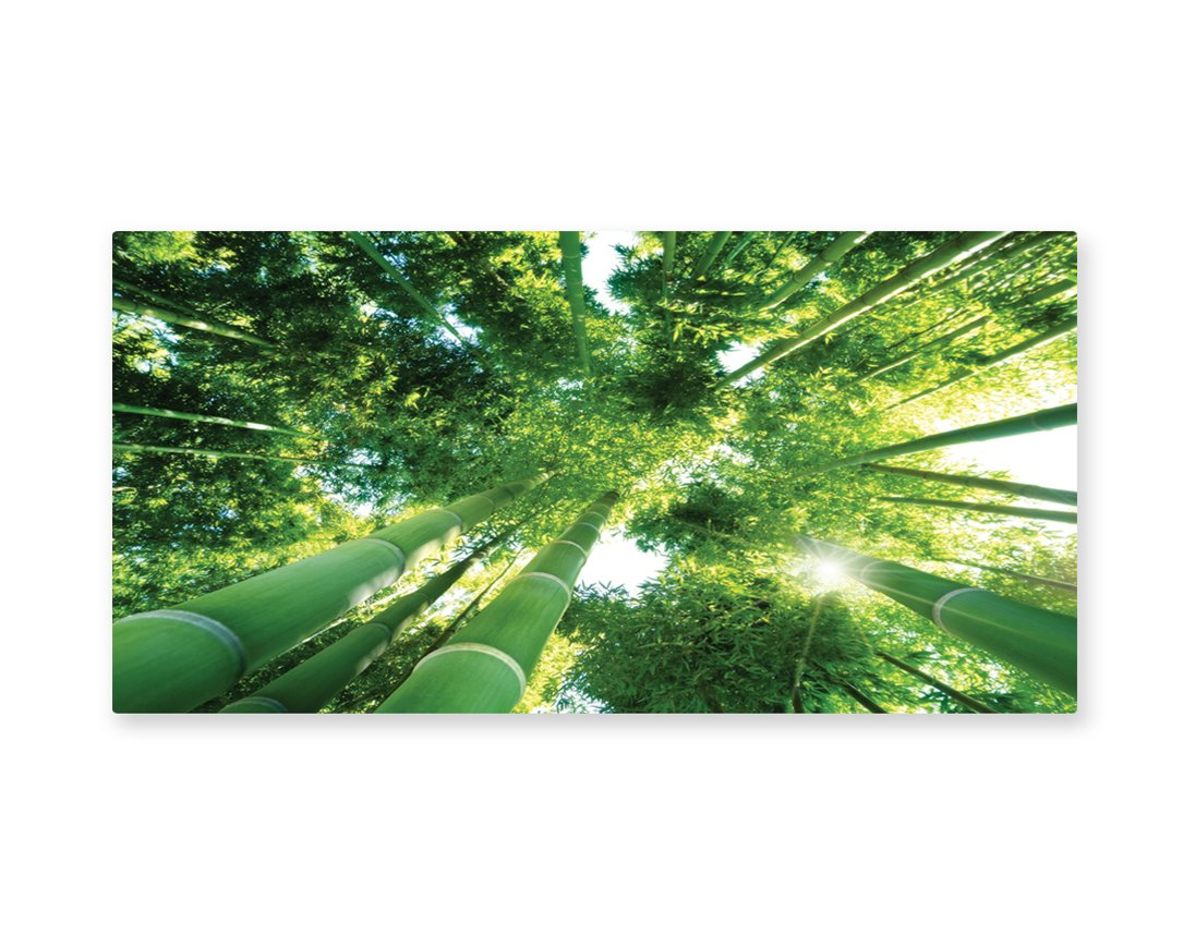 Lunarable Bamboo Wall Art, Low Angle View of Bamboo Tree Tops Asian Zen Tranquil Lands Jungle Meditation Spa Theme, Gloss Aluminium Modern Metal Artwork for Wall Decor, 23.5 W X 11.6 L Inches, Green by Lunarable (Image #1)