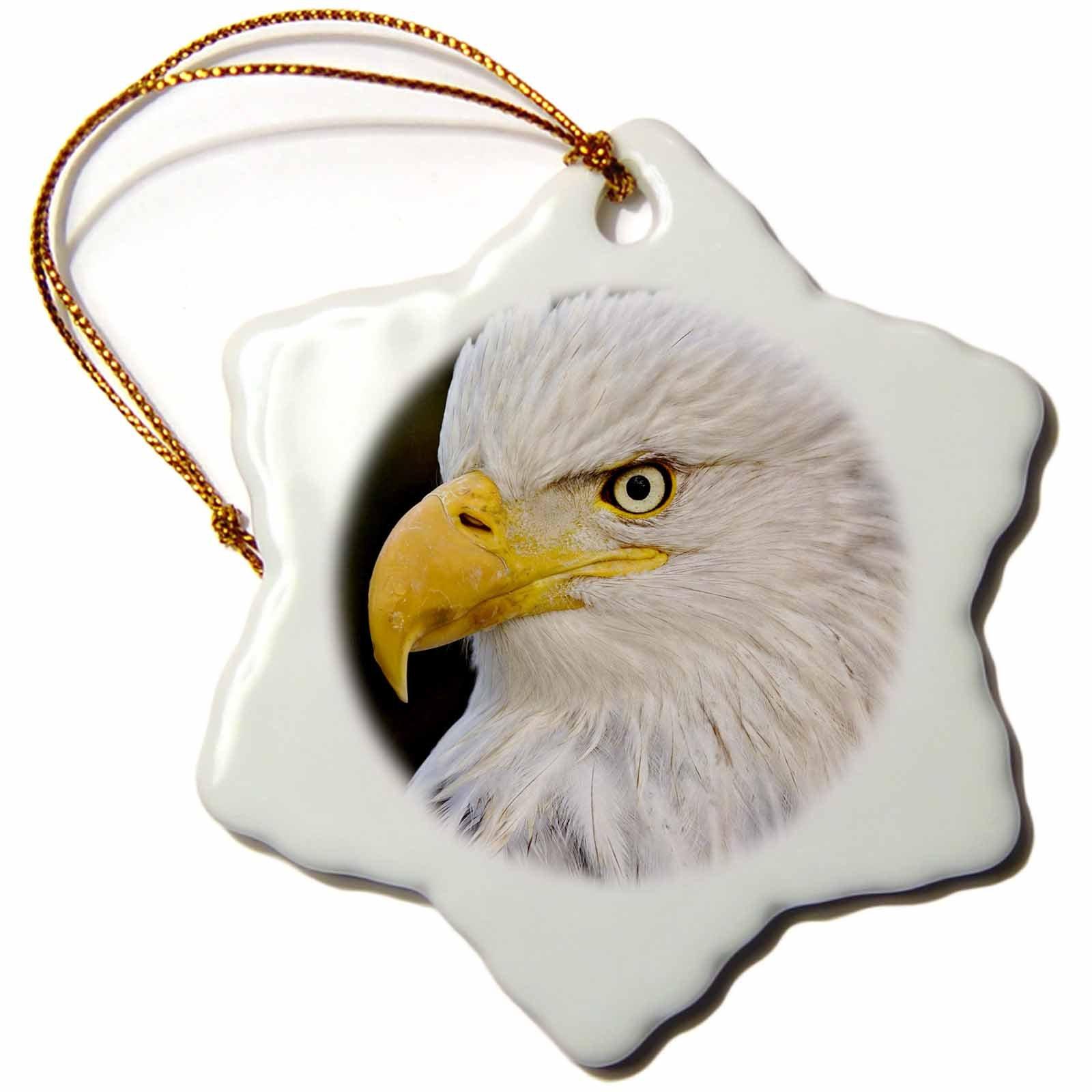 3dRose orn_87312_1 Bald Eagle, Homer, Alaska-Us02 Aje0005-Adam Jones-Snowflake Ornament, 3-Inch, Porcelain