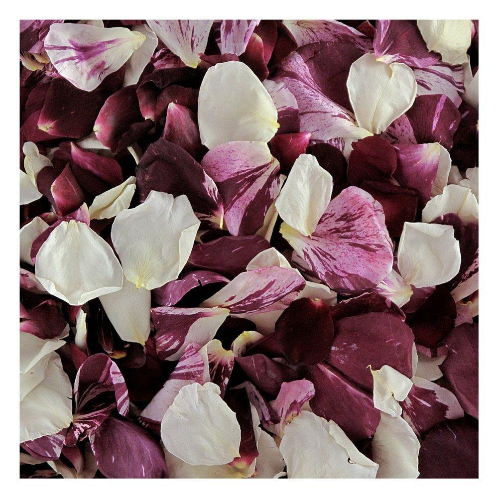 Rose Petals 300 cups. Seduction Blend Rose Petals Wedding Decoration by Flyboy Naturals