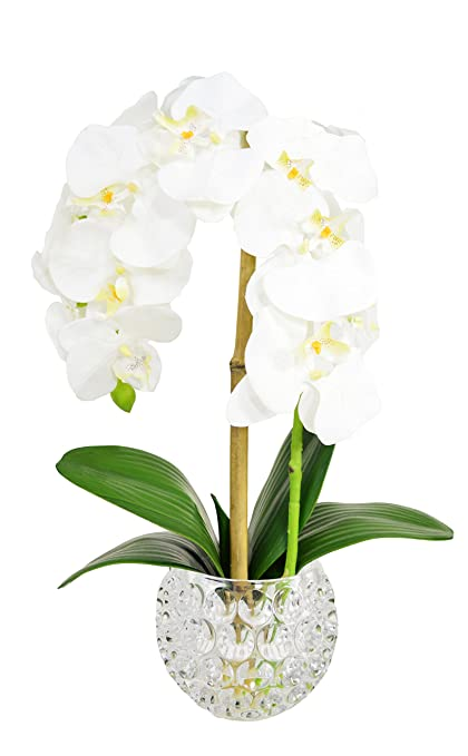 Amazon Creative Displays Single White Orchid And Bamboo In