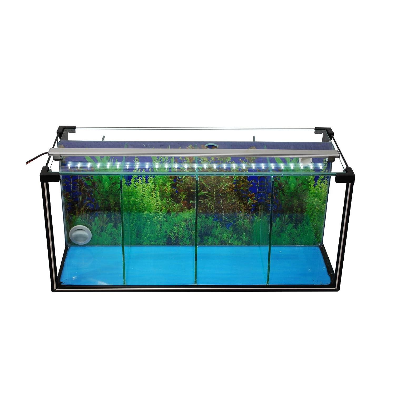 Aquarium Kit Complet D Levage Bac Betta 24 L De Crevettes D