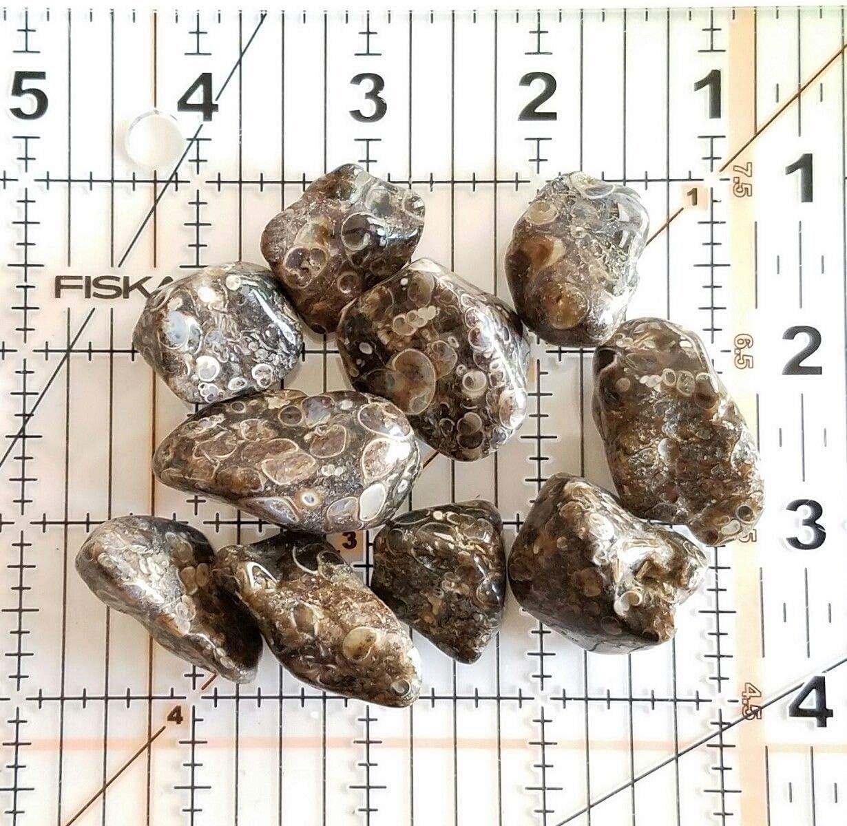 16-20 pcs Turritella Elimia Agate Tumbled 1//2 lb bulk stones