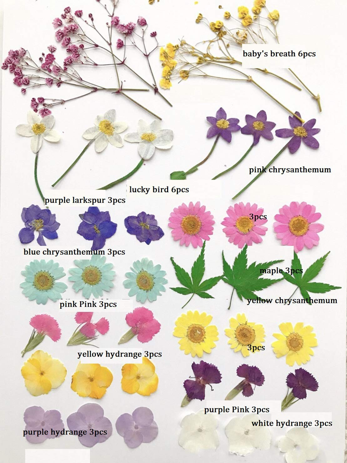 35PCS CheeseandU Real Dried Pressed Flowers Cherry Queen Annes Lace Maple Mixed Multiple Natural Pressed Flowers For Art Craft DIY Resin Larkspur Little Narcissus Chrysanthemum
