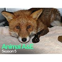 Animal A&E: Animal Rescue