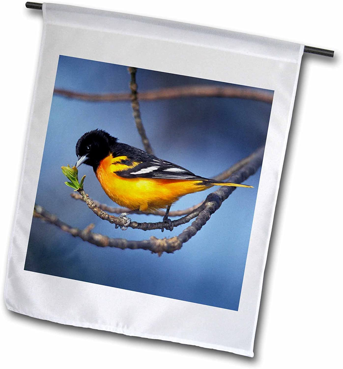3dRose fl_83569_1 Male Northern Oriole for Merly Baltimore Oriole Bird Na02 Aje0242 Adam Jones Garden Flag, 12 by 18-Inch