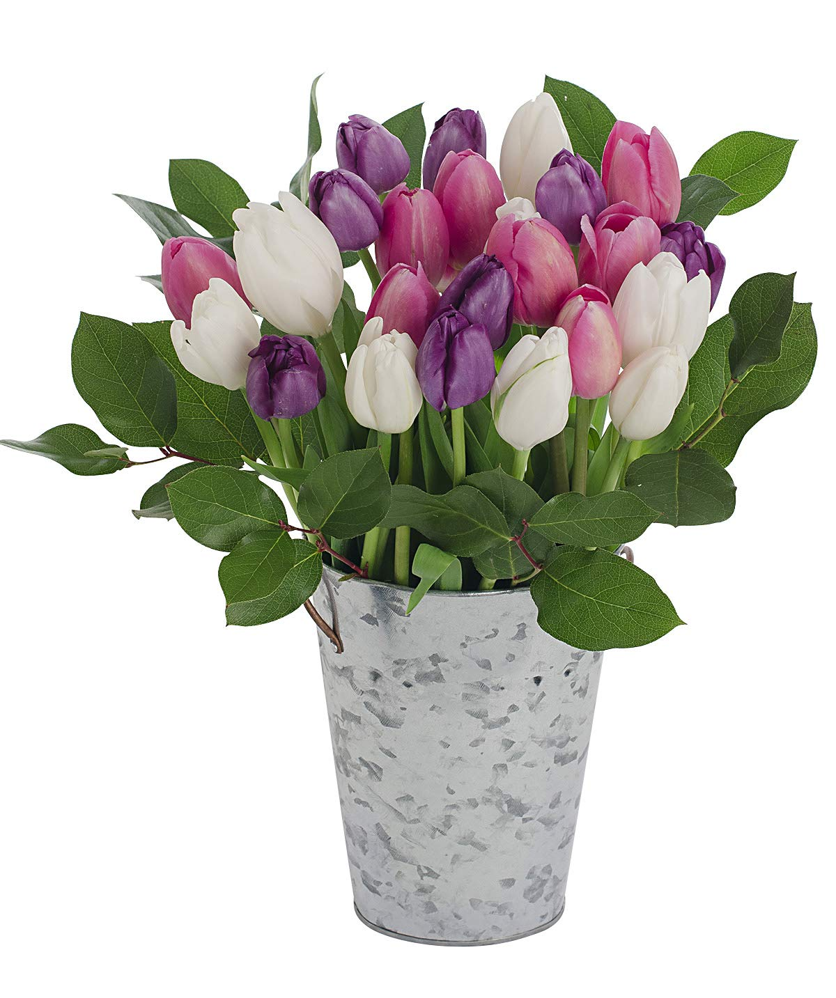 Stargazer Barn Big Flirt Bouquet 2 Dozen Assorted Pink White & Purple Tulips with French Bucket Style Vase by Stargazer Barn