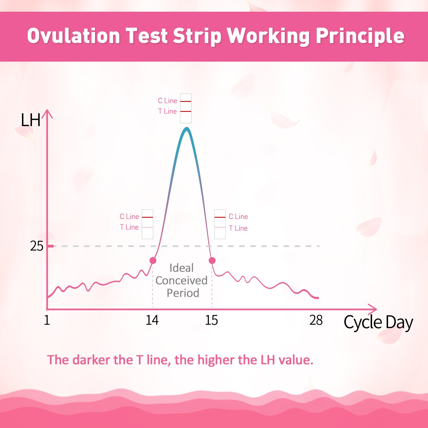 Ovulation Test Strips and Pregnancy Test Strips Combo, Sensitive and Accurate Ovulation Predictor Kit, One Step Urine Fertility Test Strip, Reliable Ovulation Test Kit(50LH+20HCG) by Beanco Tech (Image #8)