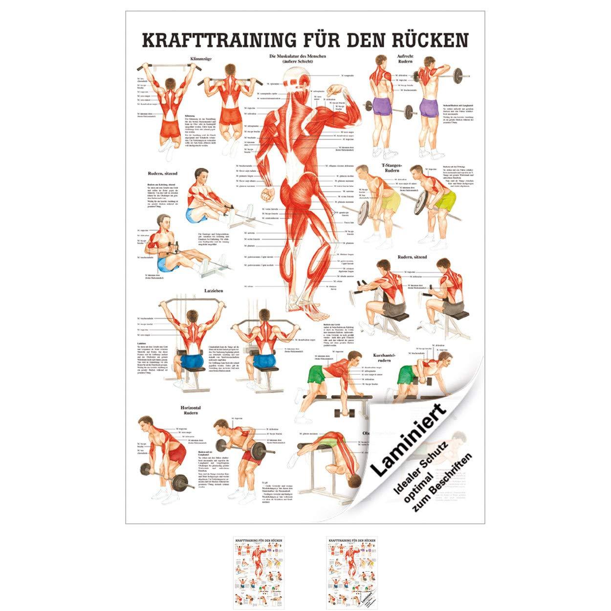 70 cm x 100 cm laminiert Ruediger Anatomie TA79LAM Krafttraining f/ür den R/ücken Tafel