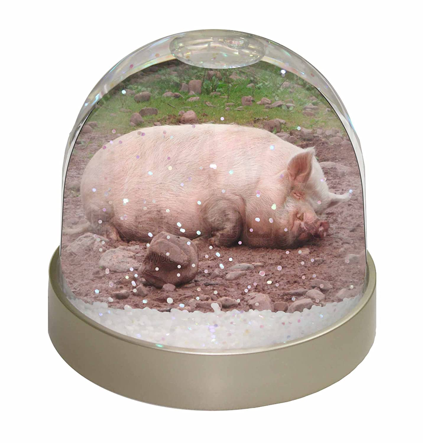 Advanta Sleeping Pig Print Snow Dome Globe Waterball Gift, Multi-Colour, 9.2 x 9.2 x 8 cm Advanta Products AP-5GL