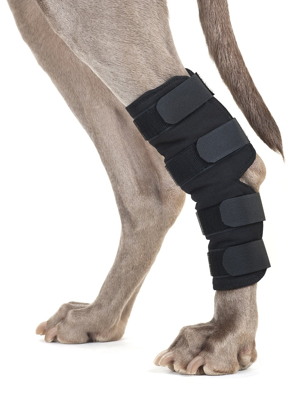 Back on Track Therapeutic Dog Rear Leg/Hock Brace (Pair) Large 8.75-Inch Length, 6.75 to 7.8-Inches Top Width, 5.1 to 6.25-Inches Bottom Width with 4 Adjustable Straps by Back on Track