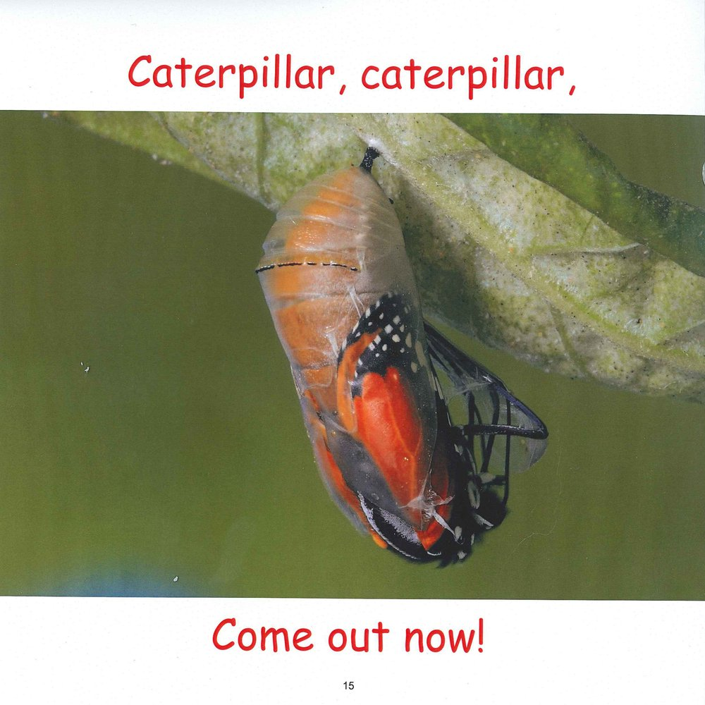 Butterfly Butterfly (life Cycle Books): Cammie Ho: 9781943241033:  Amazon: Books