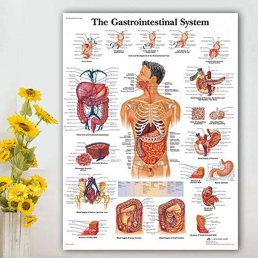 RQJOPE Sistema gastrointestinal Gráfico Cartel Mapa Lienzo ...