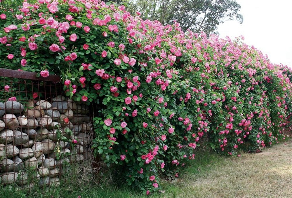 lfeey 7 x 5ft国ピンク花フェンスBackdropウェディングホーム用裏庭ホイールタイヤNature Garden Stone壁Blooming Floral Portrait写真背景写真スタジオ小道具   B07FF3GYH2