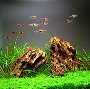 How To Set Up A Freshwater Planted Aquarium