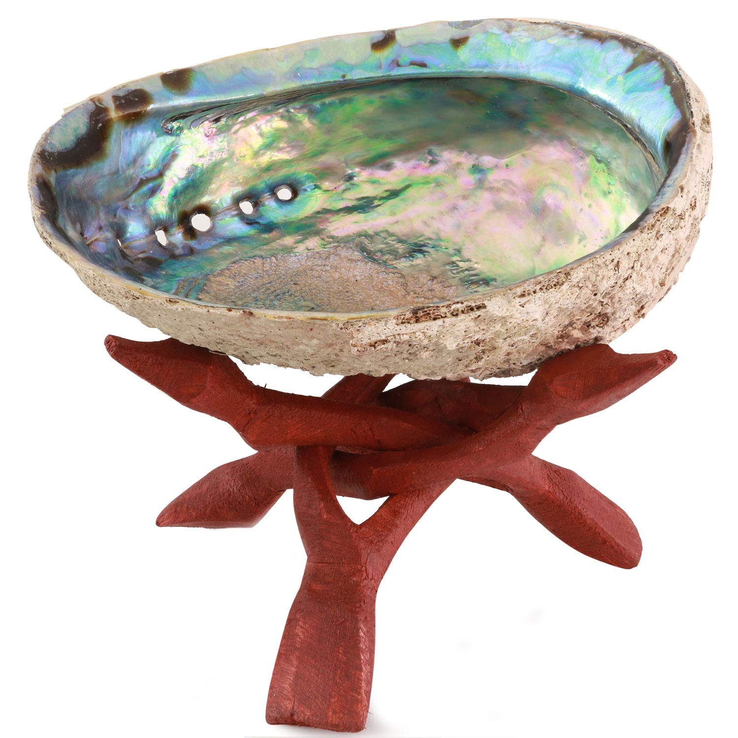 Ocean Shell Studios Premium Natural Abalone Shell Extra Large 6''- 6.5'' with Wooden Stand, for Smudging, Cleansing Home, Meditation, Shell Crafts, Home Décor, 100% Natural, Gift Box by Ocean Shell Studios.