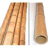 Bambusrohr 300cm gelbbraun Durch. 8 bis 10cm, Moso Natur hitzebehandelt - Bambus Rohr Bambus Latten farbige Bambusrohre Bamboo Bambus Halbschale Bambusstangen --> großes Sortiment an Bambusrohre und Rohre aus Bambus Bambus-Rohre