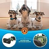 SparklyPets Humane Dog Bark Collar 2 Pack | Anti