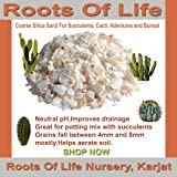 RootsOfLife Silica Sand To Grow Cactus, Succulents and Bonsai, 900 gms