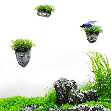 Amazon.com: SunGrow Magical Hallelujah Floating Garden ...