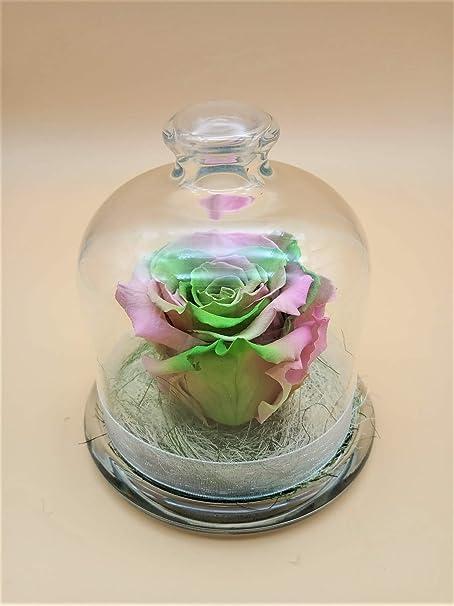 Rosa preservada Arco Iris Verde Rosa eterna Multicolor Verde cúpula de Cristal, sobre Base de Musgo y Verdes liofilizados. Hecho en España.: Amazon.es: Hogar