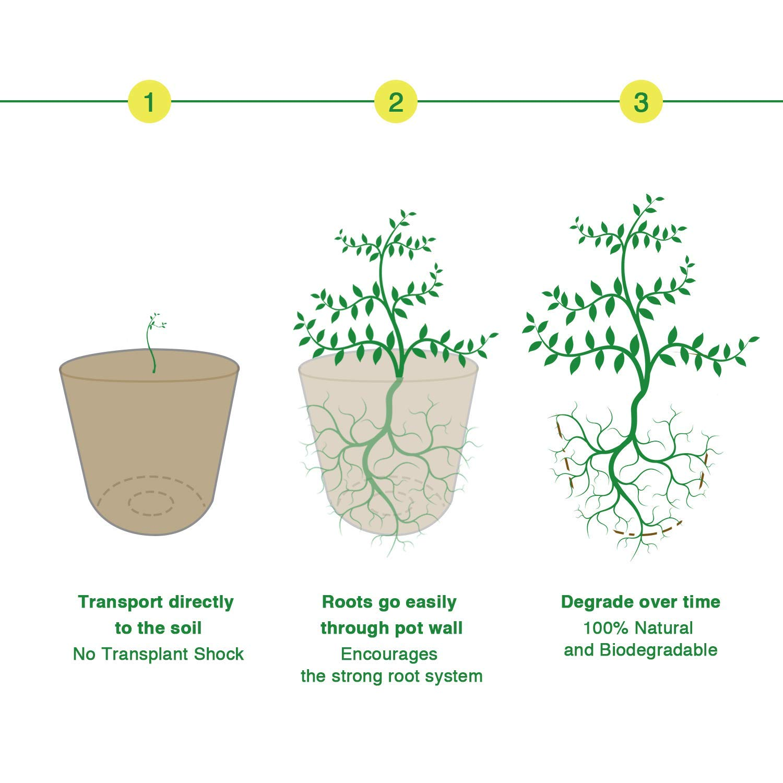 MMBOX Anzuchtt/öpfe im Set Biologisch abbaubar f/ür Pflanzen 50 St/ück Pflanzt/öpfe Zellstoff rund 8 cm beige