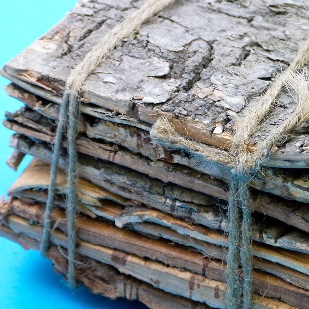 Cicada Education Bark Squares Pack of 10