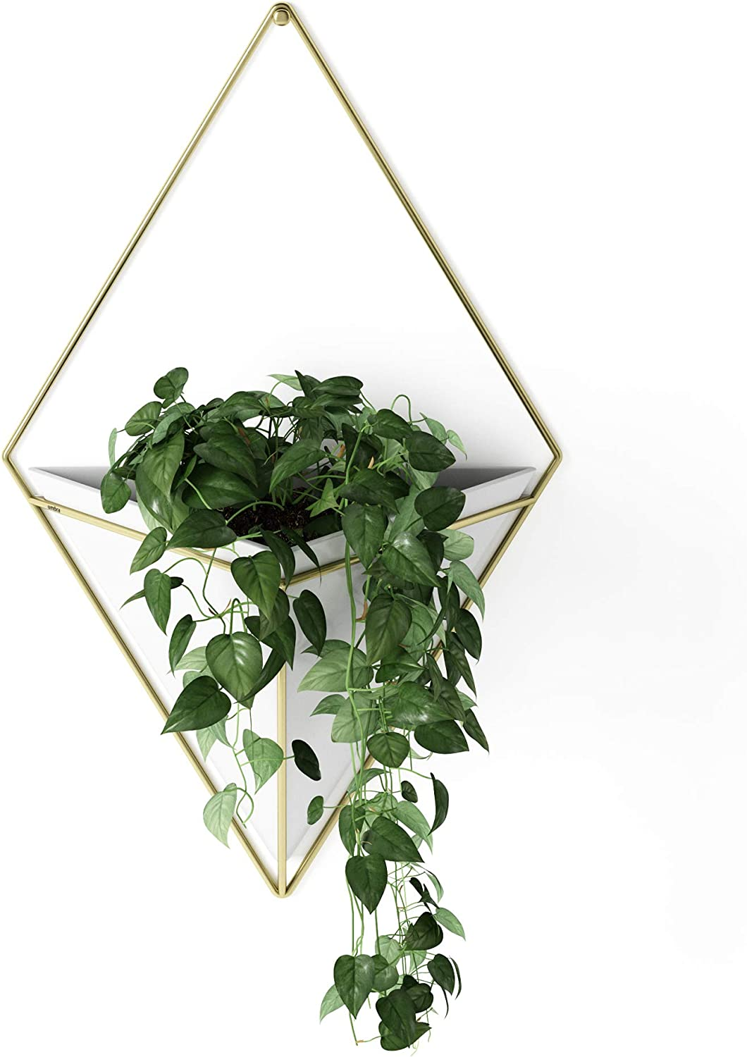 Umbra Trigg Hanging Planter Vase & Geometric Wall Decor Container - Great For Succulent Plants, Air Plant, Mini Cactus, Faux Plants and More, White Ceramic/Brass: Home & Kitchen