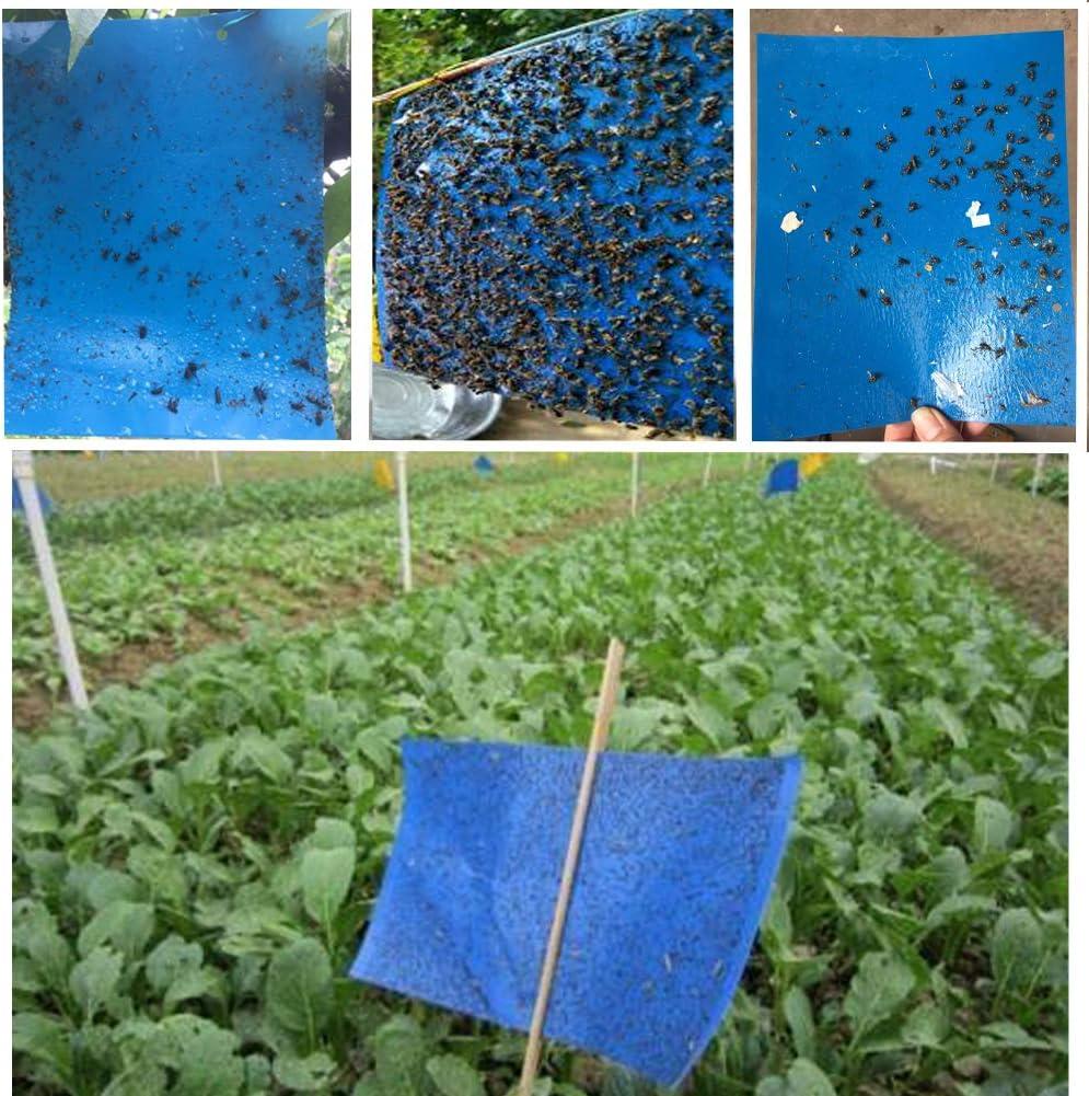 Blautafeln Profi 20 Stück 10 x 25 cm Leimtafeln gegen Thrips