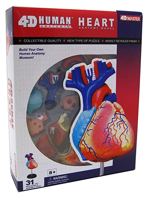 Amazon.com: 4D Master Human Anatomy Model Heart - 31 Part Puzzle ...