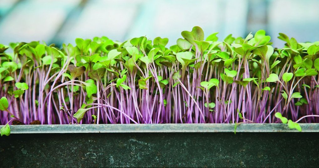 "EcoGreenText Micro-Seed Pad, Hydroponic Micro Grow Mats, Biodegradable Microgreens and Micro Herbs Grow Pads of 10"" L x 10"" W, 10 Piece MSP1010J"