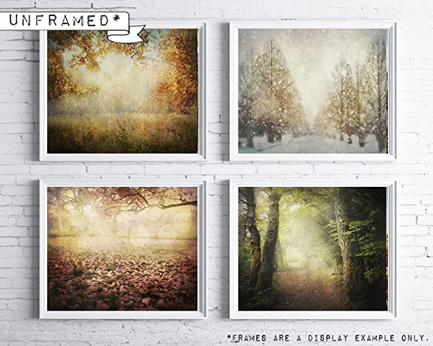 Amazon.com: Four seasons wall art - Seasonal tree photography - 4 ...