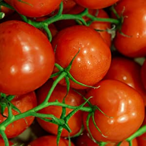 Tomato Garden Seeds - Jet Star Hybrid - 1000 Seeds - Non-GMO, Vegetable Gardening Seed