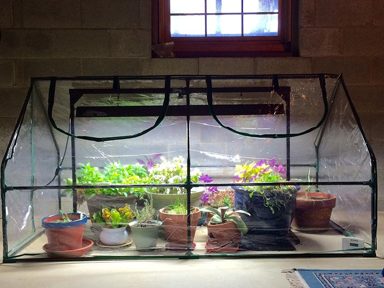 Quictent Garden Green House - Mini Portable Hot House 71'' WX 36'' D X 36'' H Greenhouse by Quictent