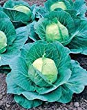 Cabbage Seed, Golden Acre, Heirloom, Organic, Non Gmo, 25+ Seeds, Tasty Healthy Veggie
