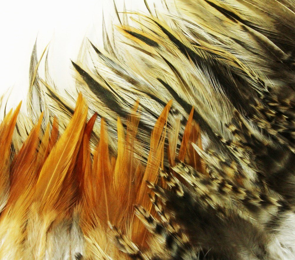 100+ Pcs Mixed Saddle & Coque Plumage Feathers 5-10 by FeatherStore.com