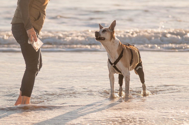 walkabout canine knee brace
