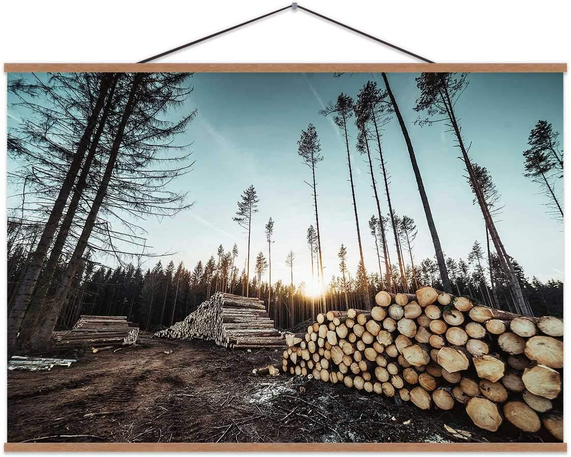 Hoveniacis Piles of Wood Logs Forestry,Decor Posters for Bedroom 24x12in