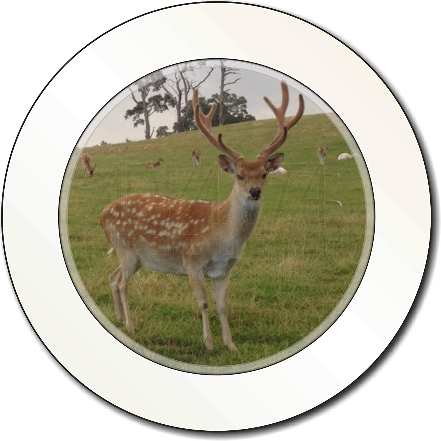 Advanta Group Baby Deer Stag Car/Van Permit Holder/Tax Disc Gift Advanta Products