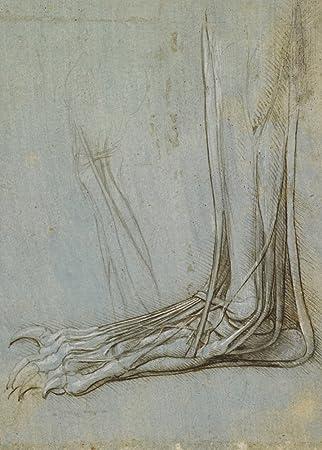 Amazon.de: Vintage Anatomie der Sehnen und Muskeln der Fuß von ...
