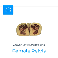 Anatomy flashcards: Female Pelvis: Learn all cadaveric on the go (Kenhub Flashcards Book 65) (English Edition)