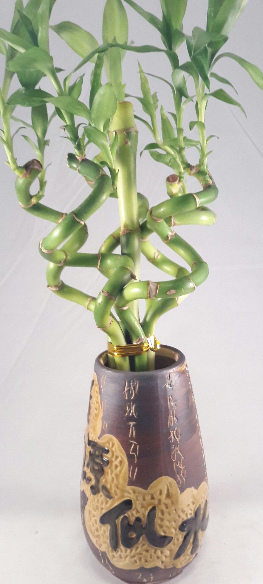 Jmbamboo - Live Spiral 6 Style Lucky Bamboo Plant Arrangement w/ Ceramic Vase unique from Jmbamboo by JM BAMBOO (Image #2)