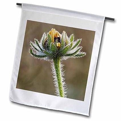 Amazoncom 3drose Danita Delimont Flowers Dew Covered Black