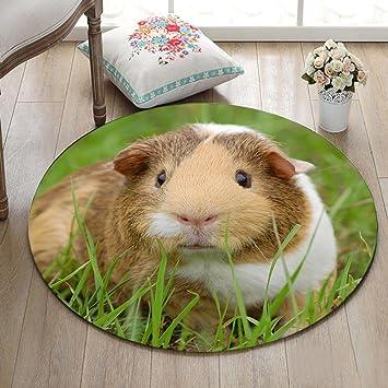 Haustiere Meerschweinchen grünes Gras Badematte Runde Bereich ...