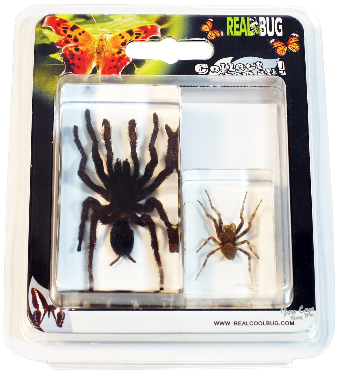 REAL BUG 2 Pc Tarantula and Spider Paperweight Collection