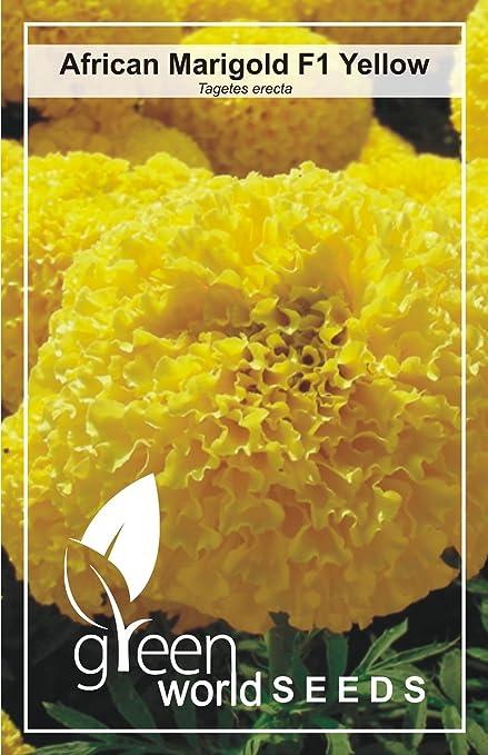 Green World African Yellow Marigold Hybrid 200 Seeds Amazon In